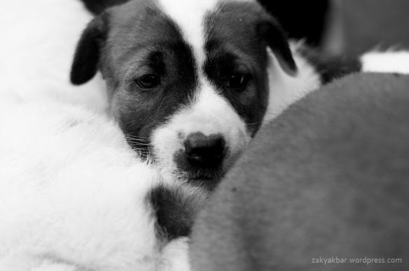 puppies by zaky akbar